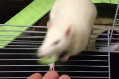 Enjoying the cucumber