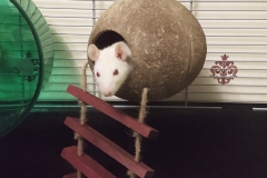 Ronnie in the coconut shell hideout