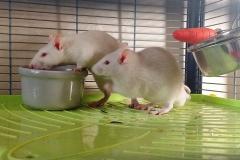 Eating (2)