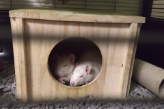 Sleeping in their house