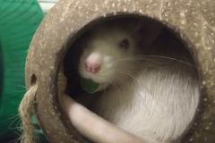Derek holding a pea in his mouth