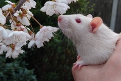 Derek sniffing tree blossom for the first time (1)