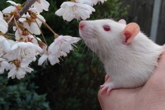 Derek sniffing tree blossom for the first time