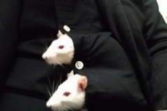 Ronnie and Derek springing out of my shirt