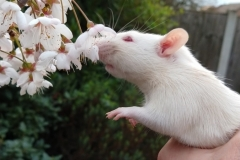 Ronnie sniffing tree blossom for the first time (2)
