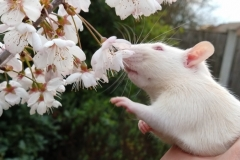 Ronnie sniffing tree blossom for the first time (1)