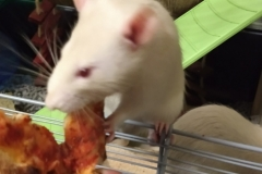 Ronnie and the pizza crust