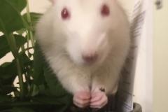 Derek eating some mint leaves