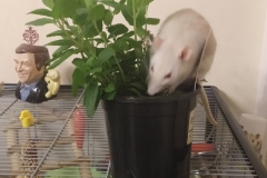 Derek exploring the mint plant