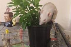 Derek exploring the mint plant