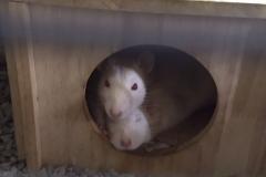 Ronnie alert; Derek sleepy!