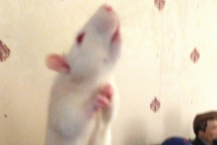 Ronnie reaching up to some food