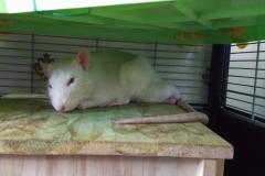 Derek resting on the house