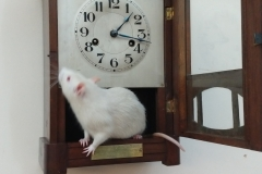 Hickory Dickory Dock... Derek ran up the clock
