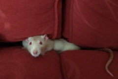 Derek in the sofa