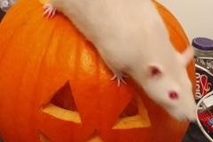Derek exploring a pumpkin