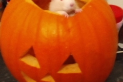 Derek in a pumpkin