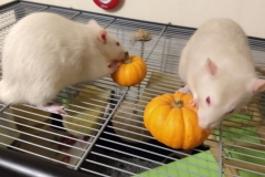 Ronnie and Derek tucking into their pumpkins