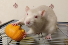 Derek tucking into his pumpkin