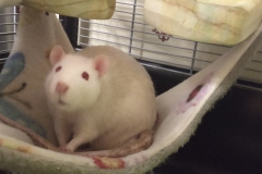 Ronnie being cheeky in the hammock
