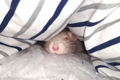 Derek cosy in the bedding