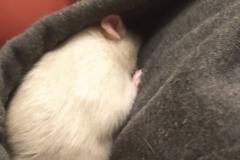 Derek hiding in my hood
