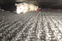 Ronnie and Derek under the sofa