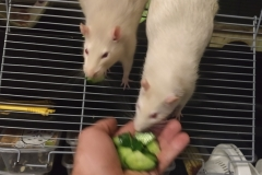 Tucking in to the home-grown cucumber
