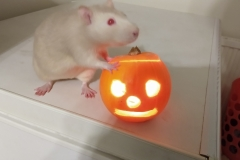 Derek and the pumpkin