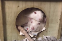Ronnie and Derek curled up in their house