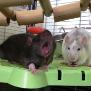 Jack doing a silly yawn, May 2021