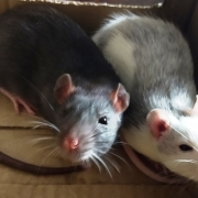 Jack and Alec resting in the Wispa box, May 2021