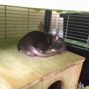 Jack resting, Apr 2021