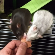 Jack and Alec trying a pink wafer, Apr 2021