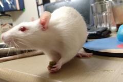 Ronnie eating a green bean (1)