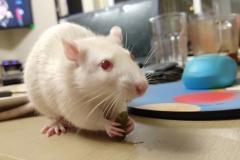 Ronnie eating a green bean (2)
