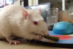 Ronnie eating a green bean (3)