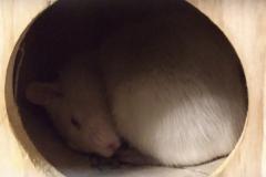 Derek asleep in their house