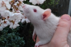 Derek sniffing tree blossom for the first time (2)