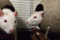 Ronnie and Derek as rat bookends