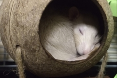 Ronnie sleeping in the shell