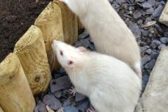 Ronnie and Derek exploring