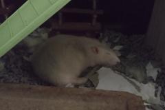 Derek finding ways of sleeping in the heat