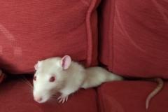 Derek in the sofa