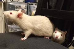 Ronnie and Derek exploring a chair