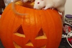 Ronnie and Derek exploring a pumpkin