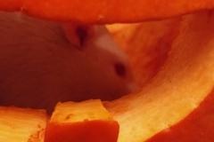 Derek in a pumpkin