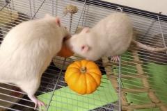 Ronnie and Derek tucking into their pumpkins