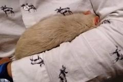Derek asleep on my arm