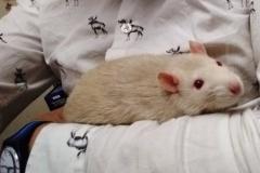Derek resting on my arm